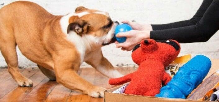 barkbox reviews - dog tested