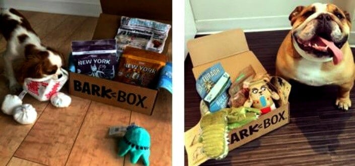 barkbox reviews - why we love barkbox1
