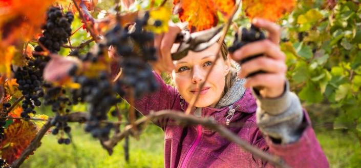 Vinesse Wine Clubs - Organic