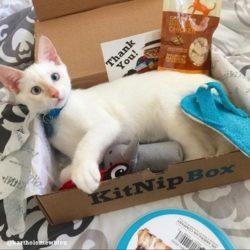 Recent KitNipBox Boxes/Items - Chicken Treats