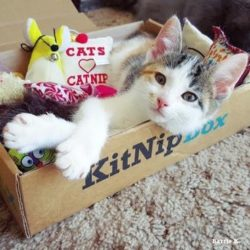 Recent KitNipBox Boxes/Items - Catnip