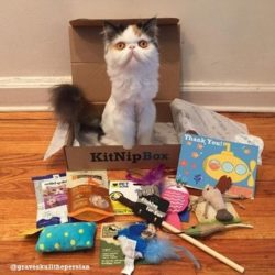 Recent KitNipBox Boxes/Items - Dangling Mouse Toy