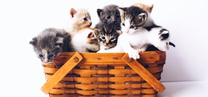 How to Subscribe to KitNipBox - How to Join Keto Box: 4 of Steps - Step 2: How Many Cats?.jpg