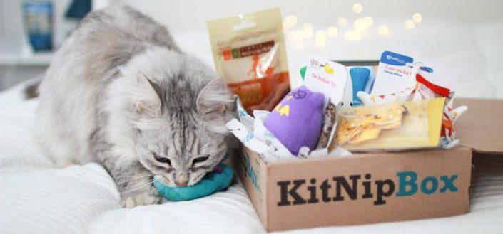 KitNipBox - Is KitNipBox worth it?