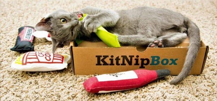 KitNipBox - KitNipBox Price