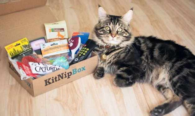 Kitnipbox Review – Is it the cat subscription for you?