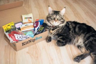Kitnipbox Review [2021] – Is it the cat subscription for you?
