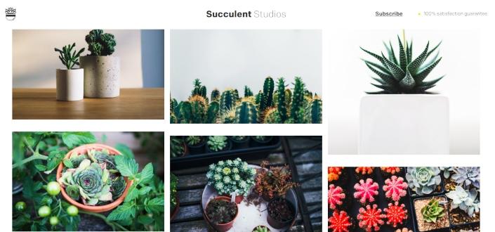 Succulent Studios - Inspiration Page