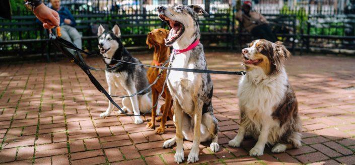 barkbox - dog size.jpg