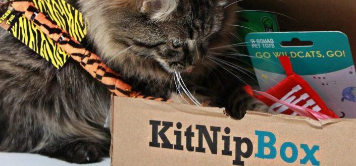 KitNipBox Review - Things To Love About KitNipBox