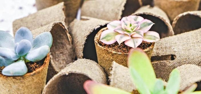 Succulent Studios - Biodegradable Pots