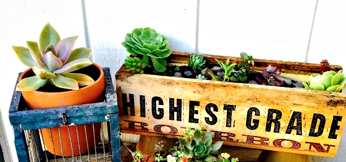 Succulent Studios - Organically grown