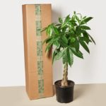 "10"" Large Indoor Plant Box"
