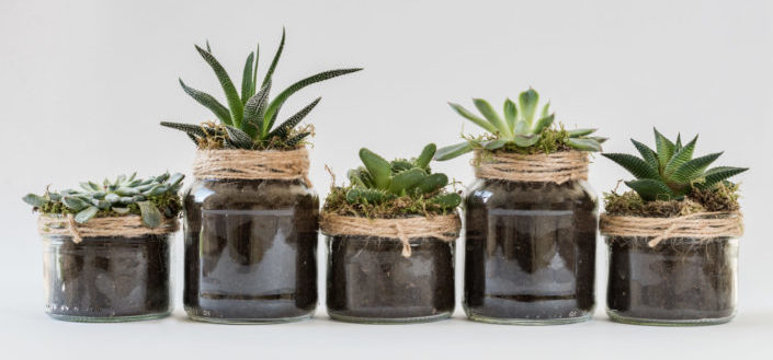 House Plant Box - Is House Plant Box worth it?.jpg
