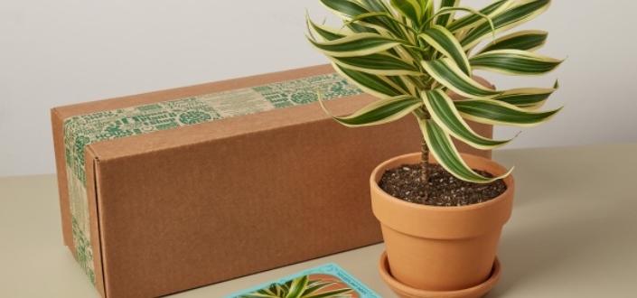House Plant Box - Recent Items (1)