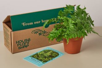 House Plant Box Review – Is it a good plant subscription?
