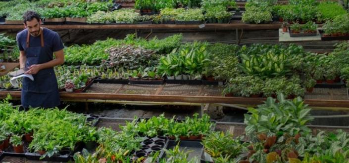 House Plant Box - Recent Reviews