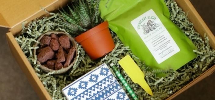 Succulents Studio - Recent boxes (1)